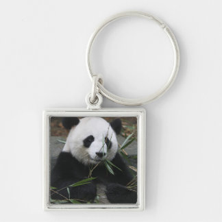 Giant pandas at the Giant Panda Protection & Keychain