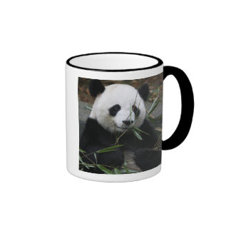 Giant pandas at the Giant Panda Protection & Coffee Mugs