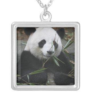 Giant pandas at the Giant Panda Protection & Pendants