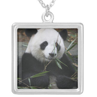 Giant pandas at the Giant Panda Protection & Square Pendant Necklace