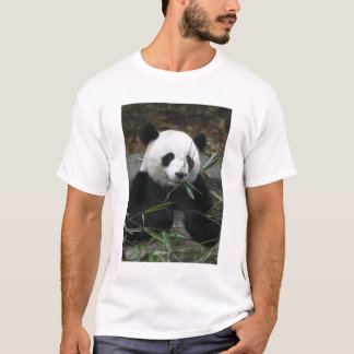 Giant pandas at the Giant Panda Protection & T-Shirt