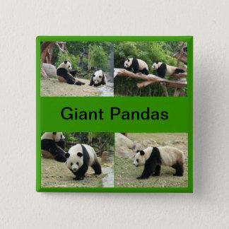 giant pandas pinback button