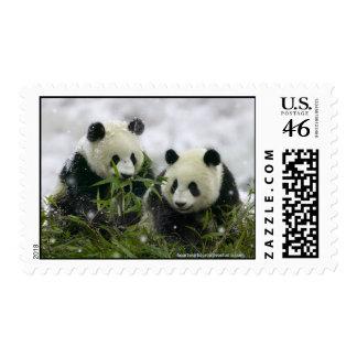 Giant Pandas Postage