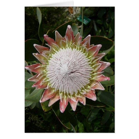 Giant Protea Flower. Card
