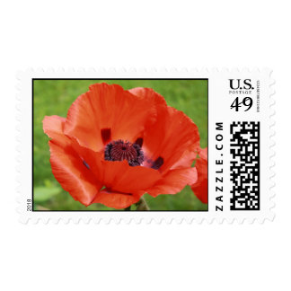 Giant Red Poppy summer time blooming flower Postage