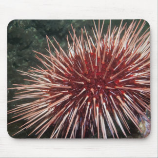 Giant Red Sea Urchin -  Mousepad