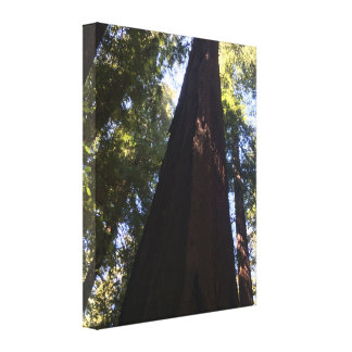 Giant Red Woods Canvas Print