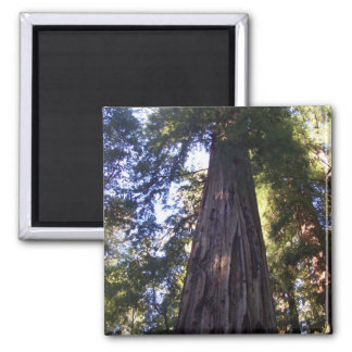 Giant Redwoods 2 Inch Square Magnet