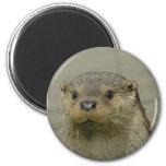 Giant River Otter Magnet Magnets