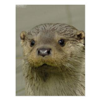 Giant River Otter Postcard