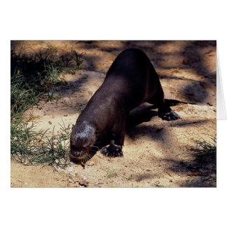 Giant river otter (Pxeronura brasiliensis) Card