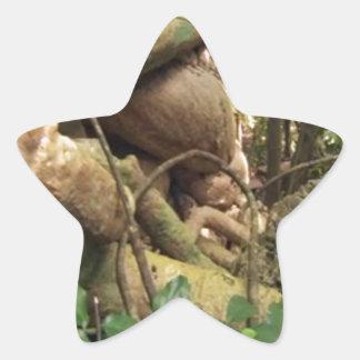 Giant root trees from Zanzibar island Star Sticker
