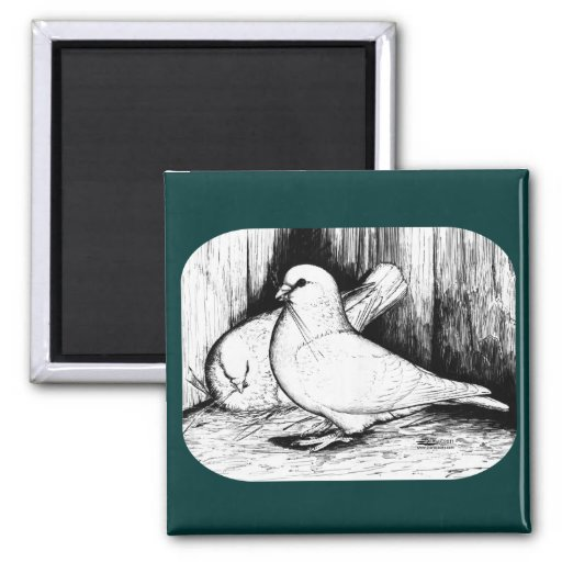 Giant Runt Pigeons Magnets