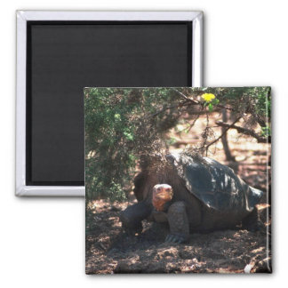 Giant Saddle-Backed Tortoise Standing Magnets