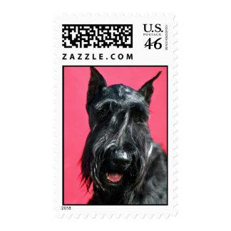 Giant Schnauzer Postage Stamp