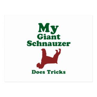 Giant Schnauzer Postcard