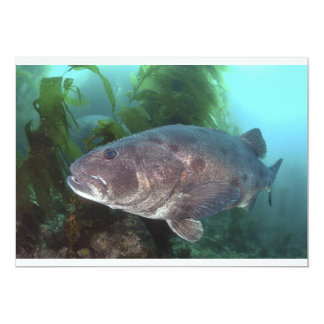 Giant Sea Bass 5x7 Paper Invitation Card