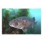 Giant Sea Bass Custom Invite