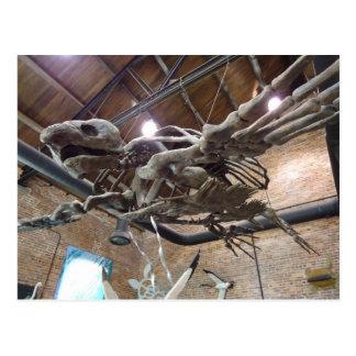 Giant Sea Turtle Archelon Postcard