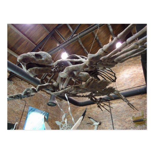 Giant Sea Turtle Archelon Postcard
