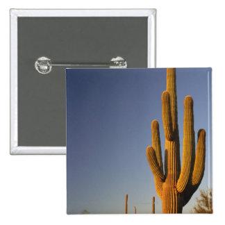 Giant Seguaro Cactus, Organ Pipe Nat'l. Buttons