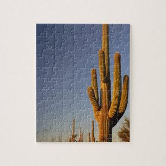 Giant Seguaro Cactus, Organ Pipe Nat'l. Jigsaw Puzzle