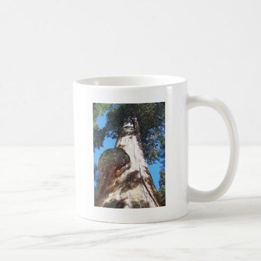 Giant Seqouia Coffee Mugs