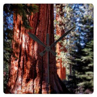Giant Sequoia Clock