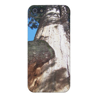 Giant Sequoia Cover For iPhone SE/5/5s