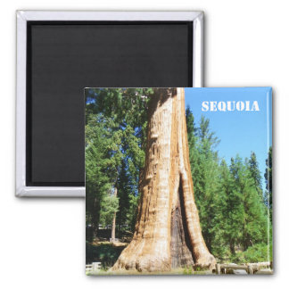 Giant Sequoia Magnet! 2 Inch Square Magnet