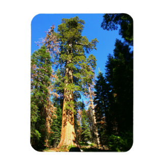 Giant Sequoia National Monument Magnet
