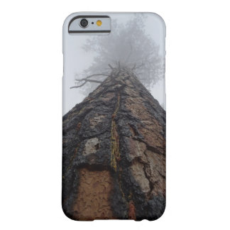 Giant Sequoia tree photo Phone case
