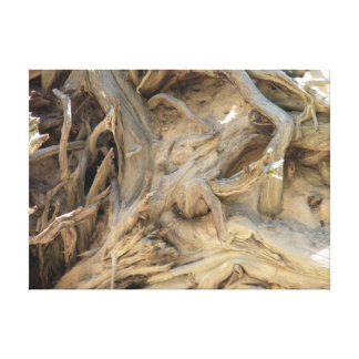 Giant Sequoia Tree Roots Photograph, Large Canvas Print