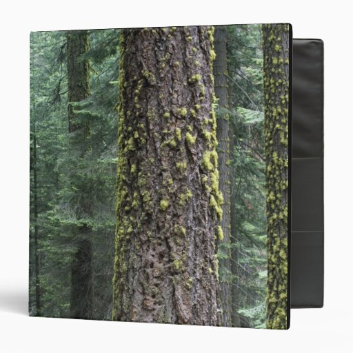 Giant Sequoia trees in the forest, Sequoia and 3 Ring Binders