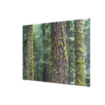 Giant Sequoia trees in the forest, Sequoia and Canvas Print