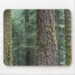 Giant Sequoia trees in the forest, Sequoia and Mouse Pad