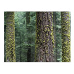Giant Sequoia trees in the forest, Sequoia and Postcard