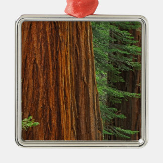 Giant Sequoia trunks in forest, Yosemite Metal Ornament