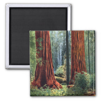 Giant Sequoia Trunks 2 Inch Square Magnet