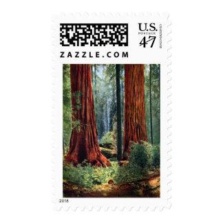 Giant Sequoia Trunks Postage