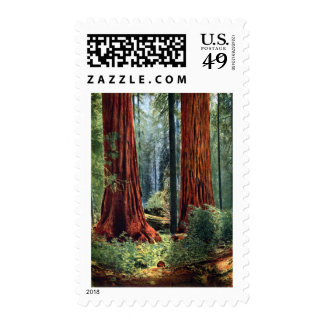 Giant Sequoia Trunks Postage Stamp