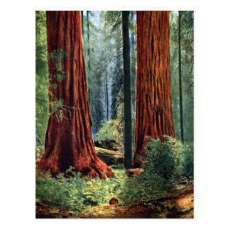 Giant Sequoia Trunks Post Cards