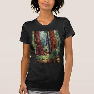 Giant Sequoia Trunks T-Shirt