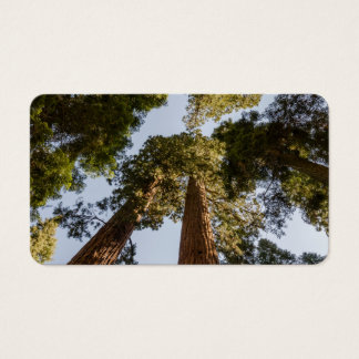 Giant Sequoias in Sequoia National Park Business Card