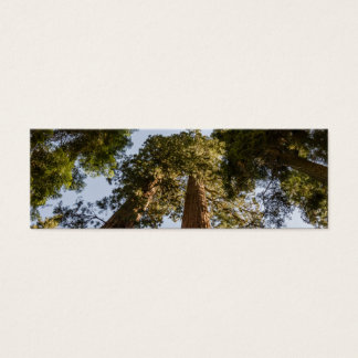 Giant Sequoias in Sequoia National Park Mini Business Card
