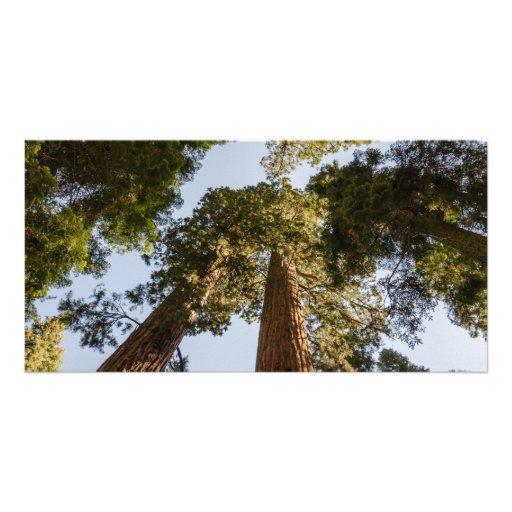 Giant Sequoias in Sequoia National Park Custom Photo Card