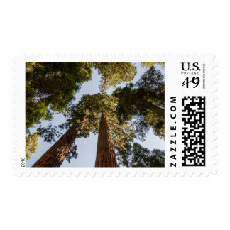 Giant Sequoias in Sequoia National Park Postage