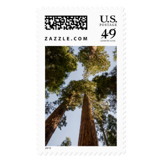 Giant Sequoias in Sequoia National Park Postage Stamp