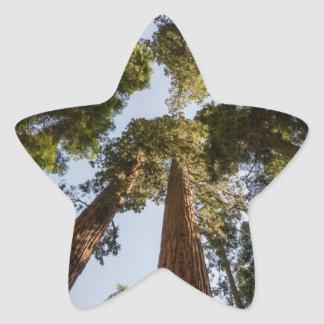 Giant Sequoias in Sequoia National Park Star Sticker
