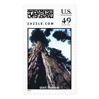 giant sequoias postage stamp